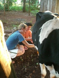 Megan milking a neighbor's cow in Tavapy Dos, Paraguay